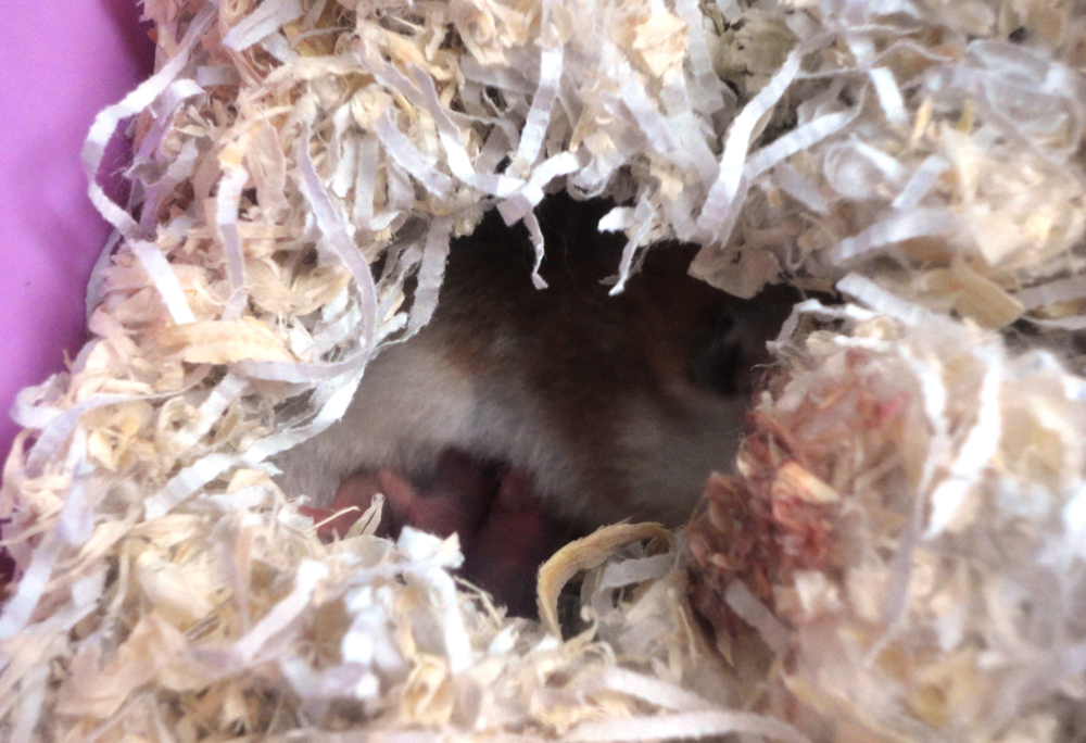 hamsters_nest.png