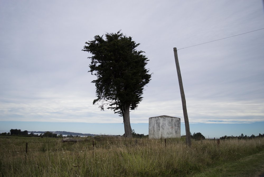 The Tree, The Post and the Water Tank - Hannah O'Hara