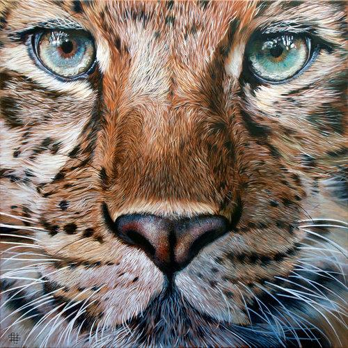 Amur Leopard - Steve Nayar