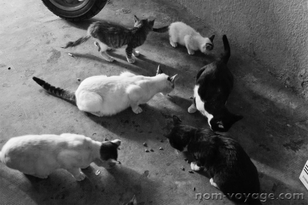One of the workers at the Palace saw how much we liked the cats and took us into a garage where he had bags and bags of cat food. It was wonderful to meet someone who cared about them as much as we did. He fed them all while I took photos of them eating.