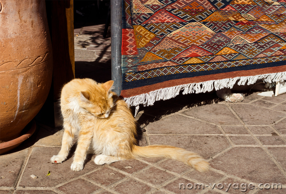 An older ginger cat cleaning itself outside of a rug vendor's stall near Jemaa El Fna.