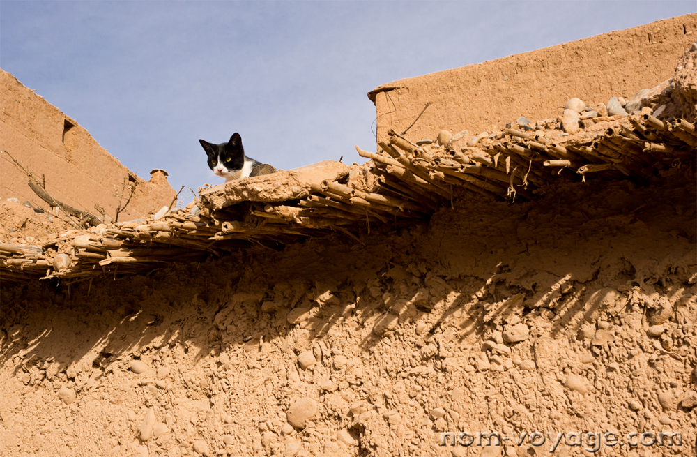 We stopped at a mechanics heading south towards Merzouga. This kitten was watching us from a rooftop nearby.