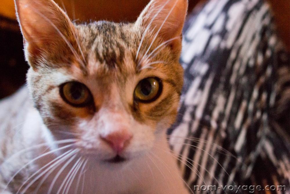 Angelina's sweet kitty face.