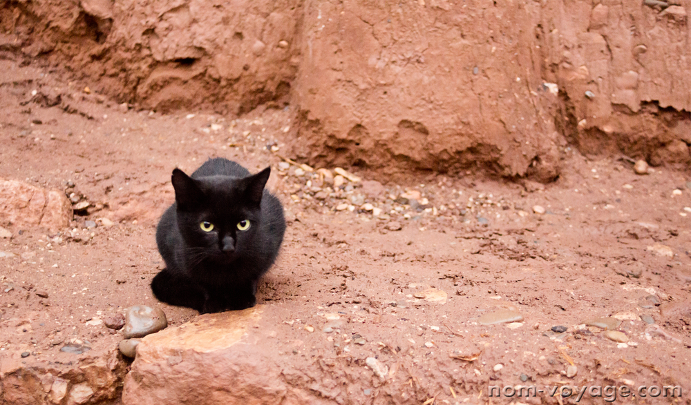 The best part of Ait Benhaddou. This sweet little black kitten was too afraid to come get the cat treats we had, but I threw a bunch on the ground hoping he'd come out a little later. You don't see a lot of black cats in Morocco.