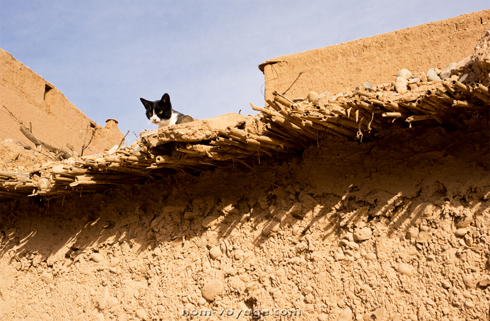 DesertTour19.jpg