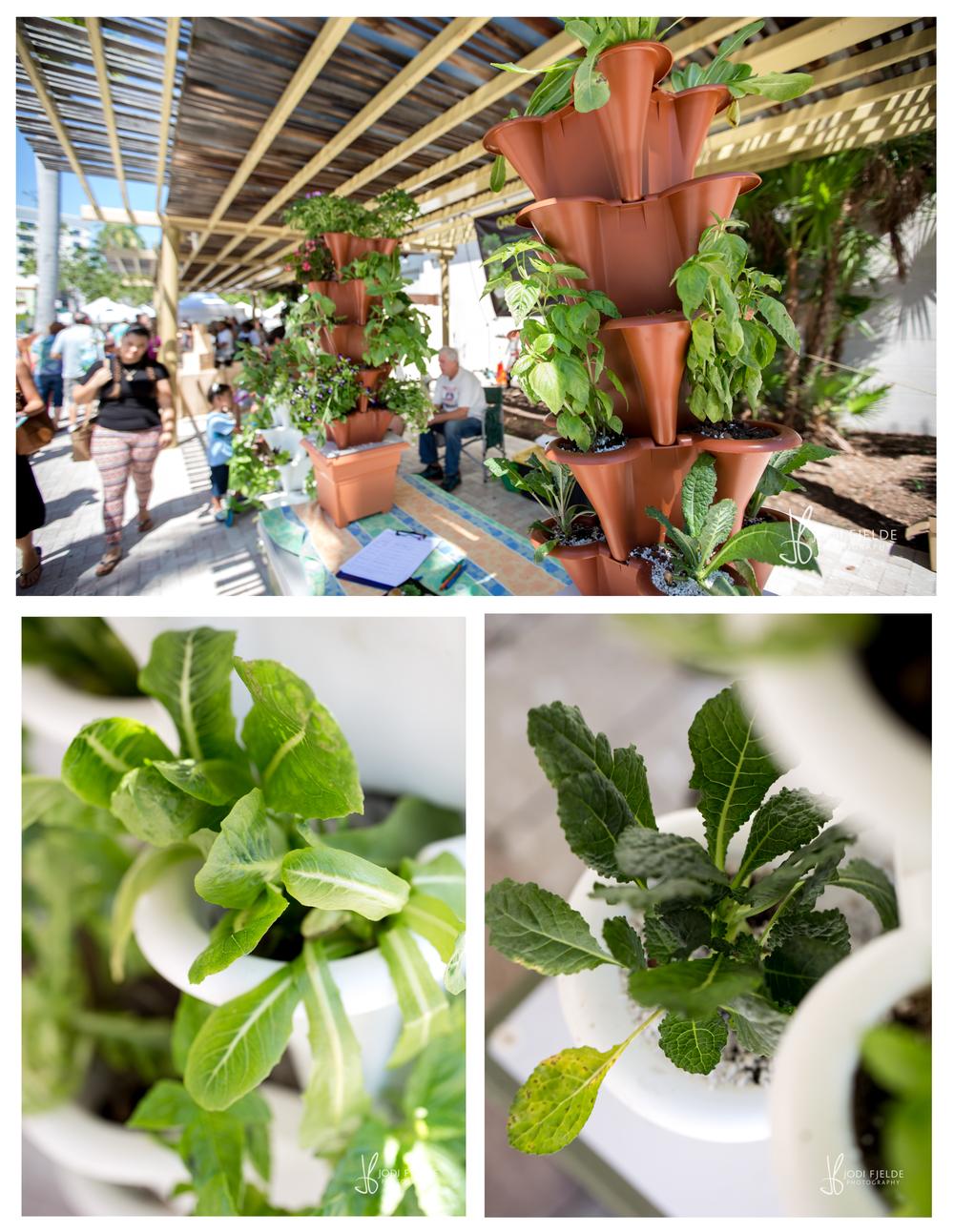 West_Palm_Beach_Green_Market_Organic_jodi_fjelde_Photography_10.jpg
