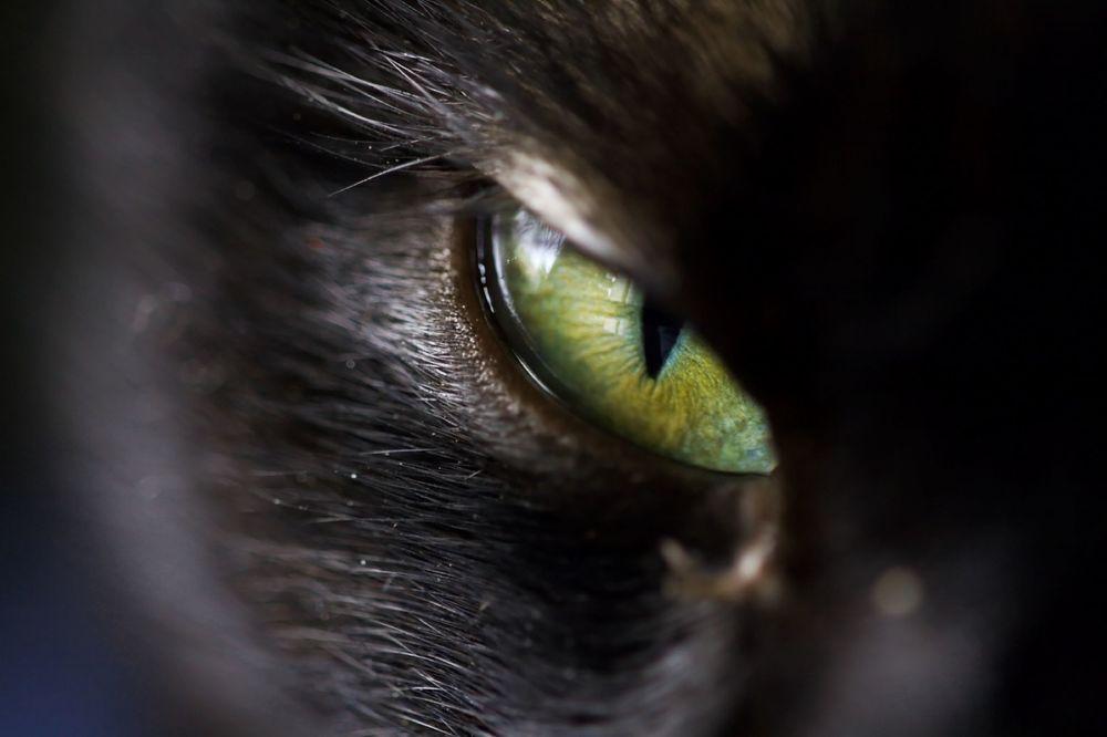 Devils eye - Dino Quinzani