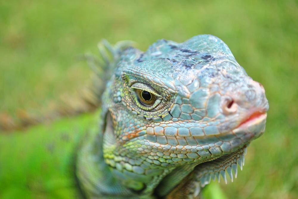 Eye Of The Iguana - Mohamed Malik