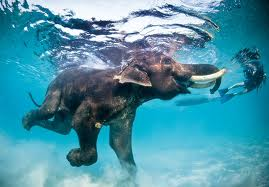 Some animals are meant for swimming. Like this smiling, elatedelephant.