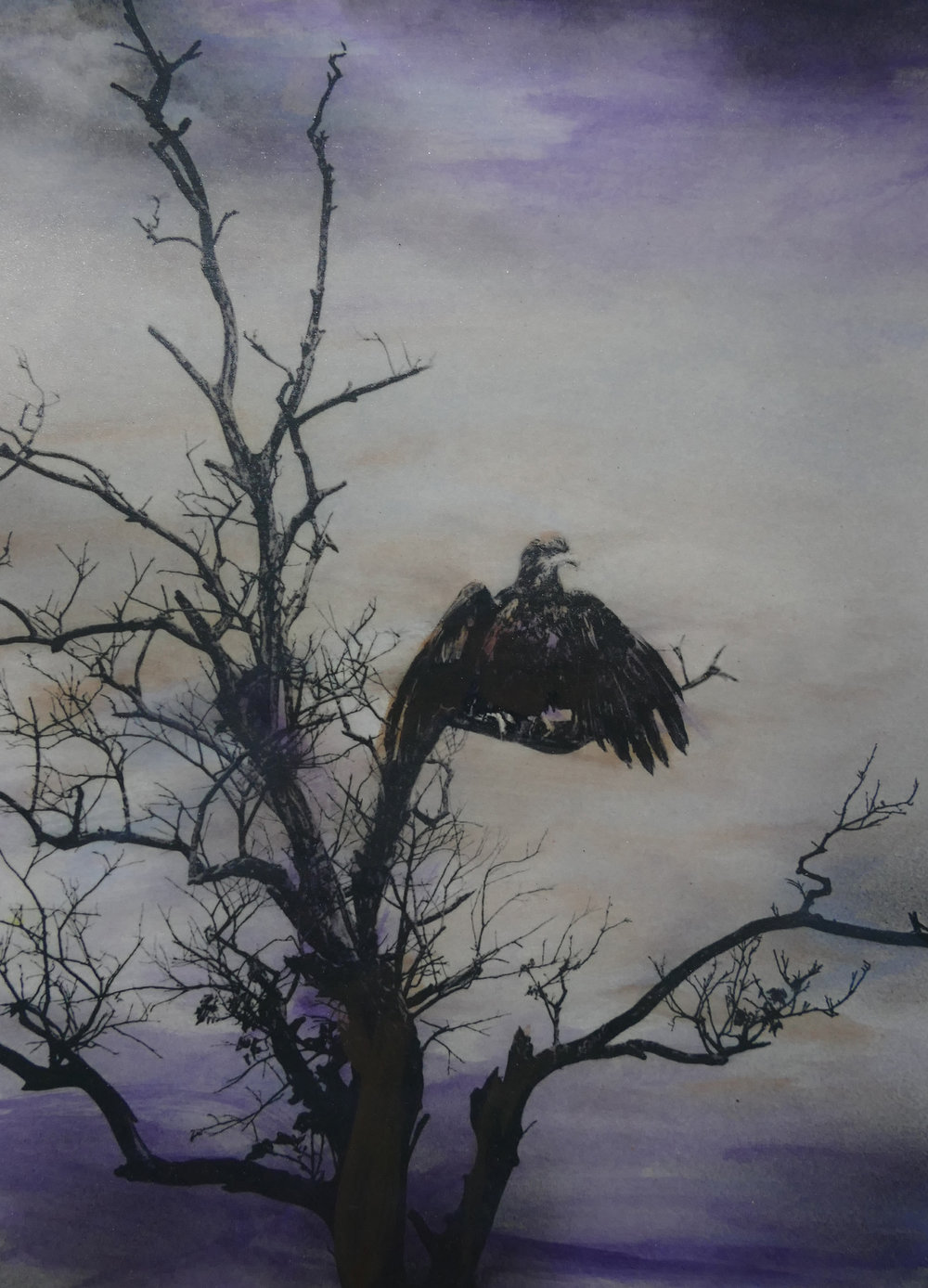 Bald eagle Encaustic