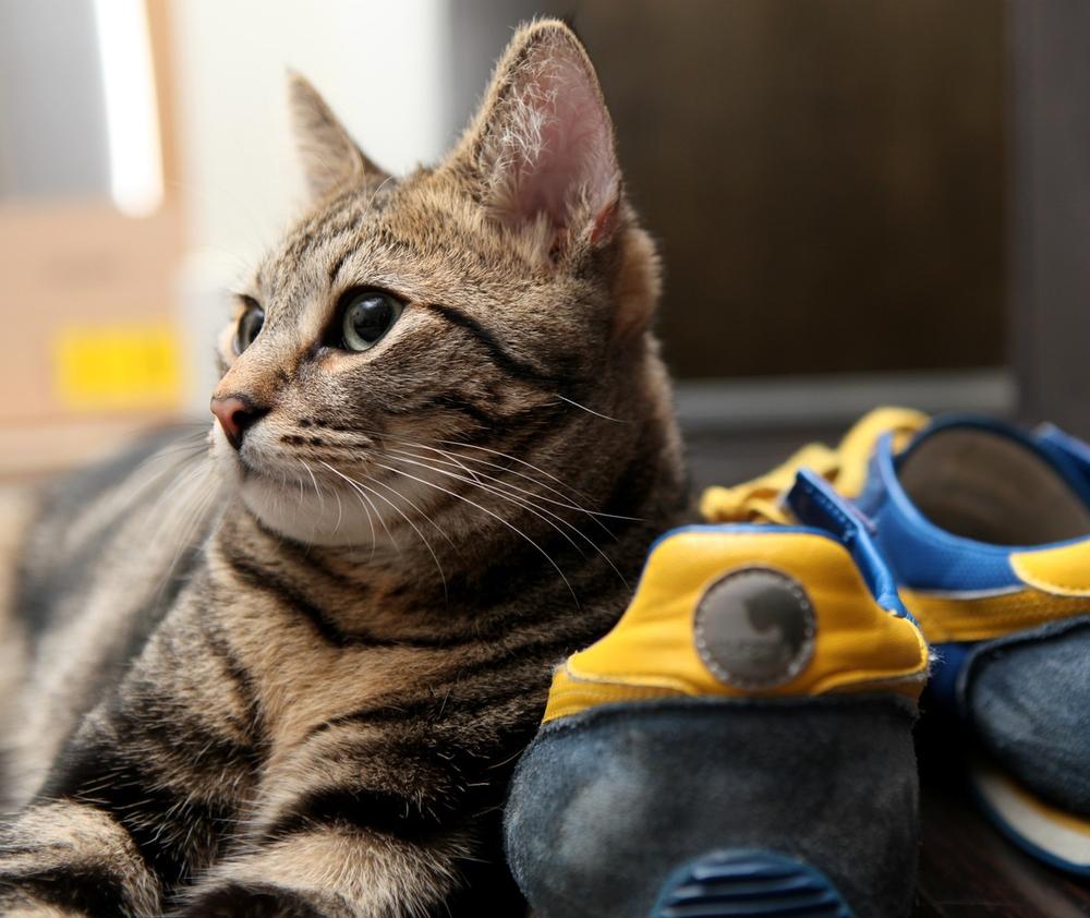 evan blaser - cat.jpg