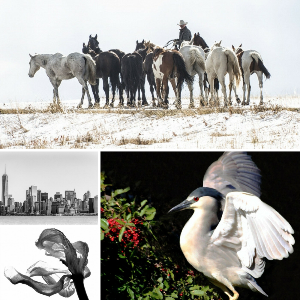"""Counting Heads"" by Joanne Collins ""Black-Crowned Night Heron"" by Barbara DiMattio ""Tulip - Unfolding"" by Madeline Alpert ""Manhattan Island"" by Greg Rains"