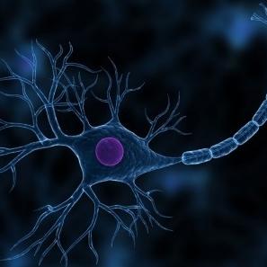 nerve regeneration.jpg