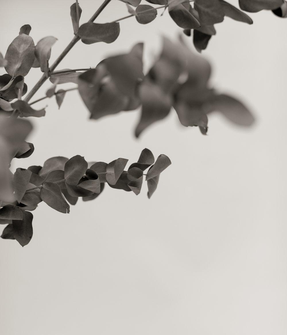 SavageStudio_Klinckwort-Laframboise-10.jpg