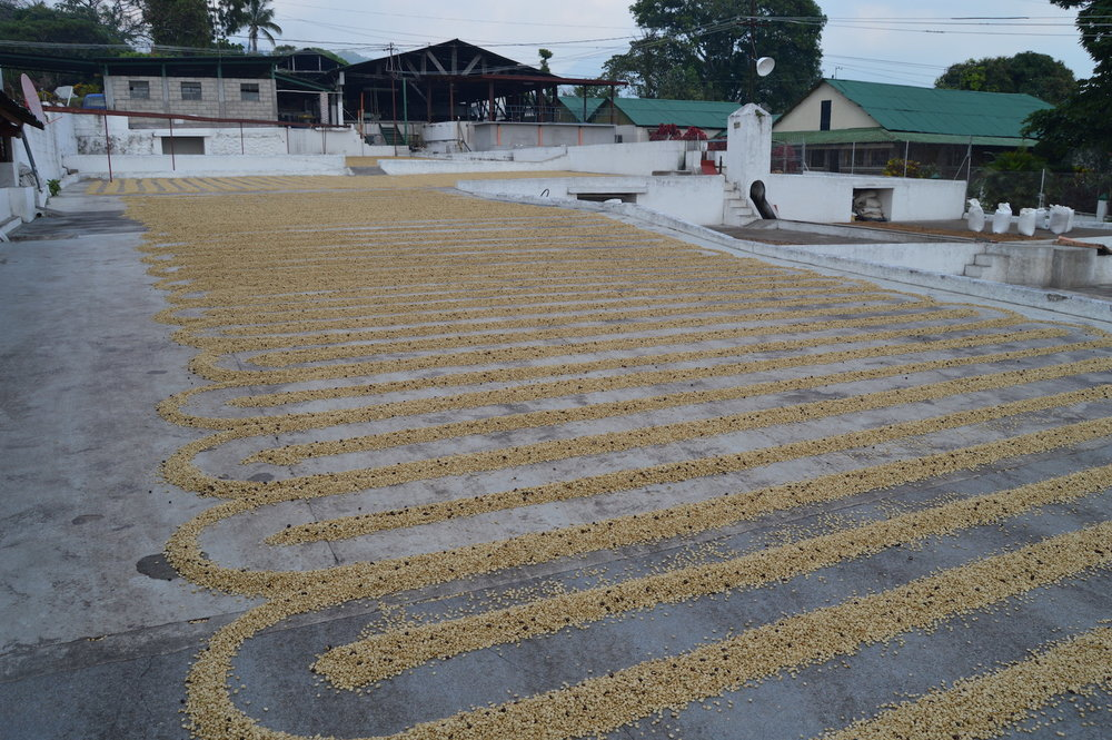 Coffee drying patios at Finca San Jerónimo Miramar