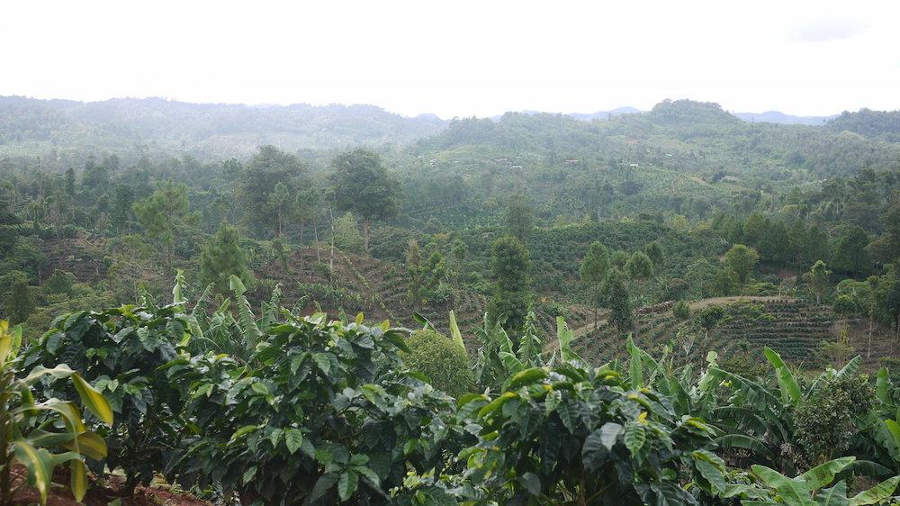 Nicaragua   Finca San Jose de las Nubes