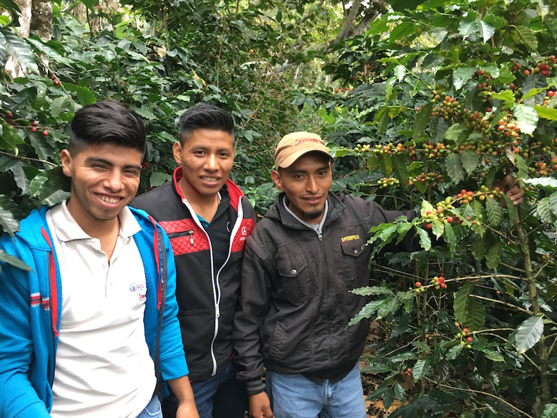 The Technical Assistance team for UPC assists member farmers with coffee production expertise.