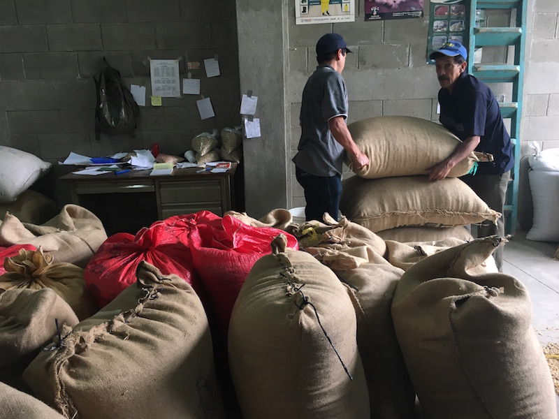 Cooperative members bring their coffee in parchment to the Cooperative headquarters to go to a dry milling facility.