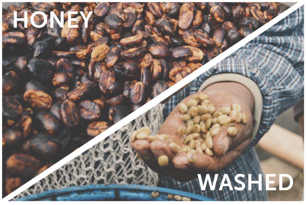 WEEK 4: geisha 2 ways  Two Geishas processed differently from Finca San Jeronimo Miramar in Atitla, Guatemala