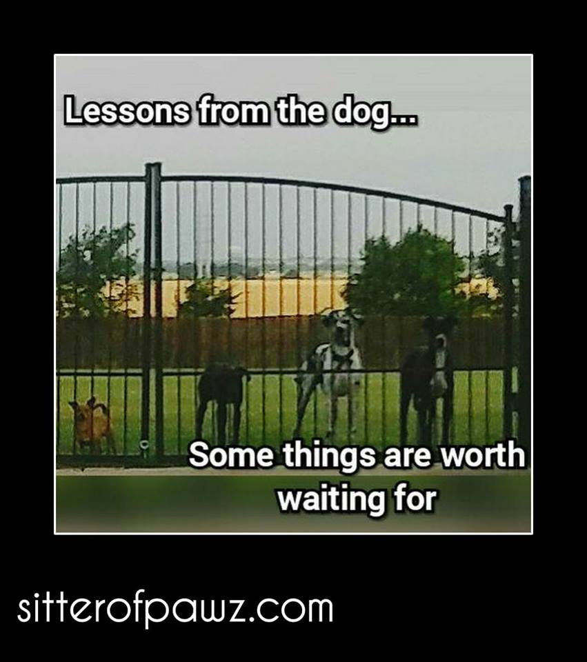 Life lessons are sometimes best taught by people with fur. -