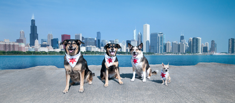 Dogs Skyline Picture copy.jpg