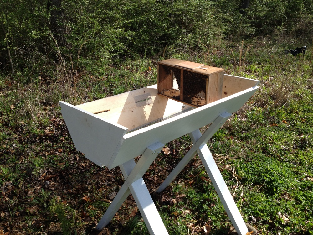 Package of bees being installed in Top Bar Hive