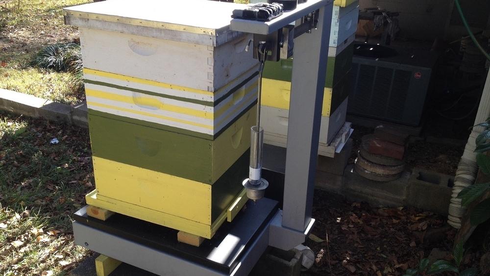 Hive Scale Data