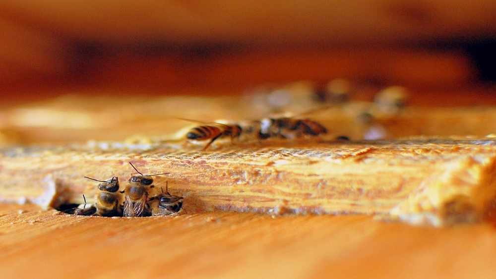 Blog: Sharing tips, product updates, designs, beekeeping events