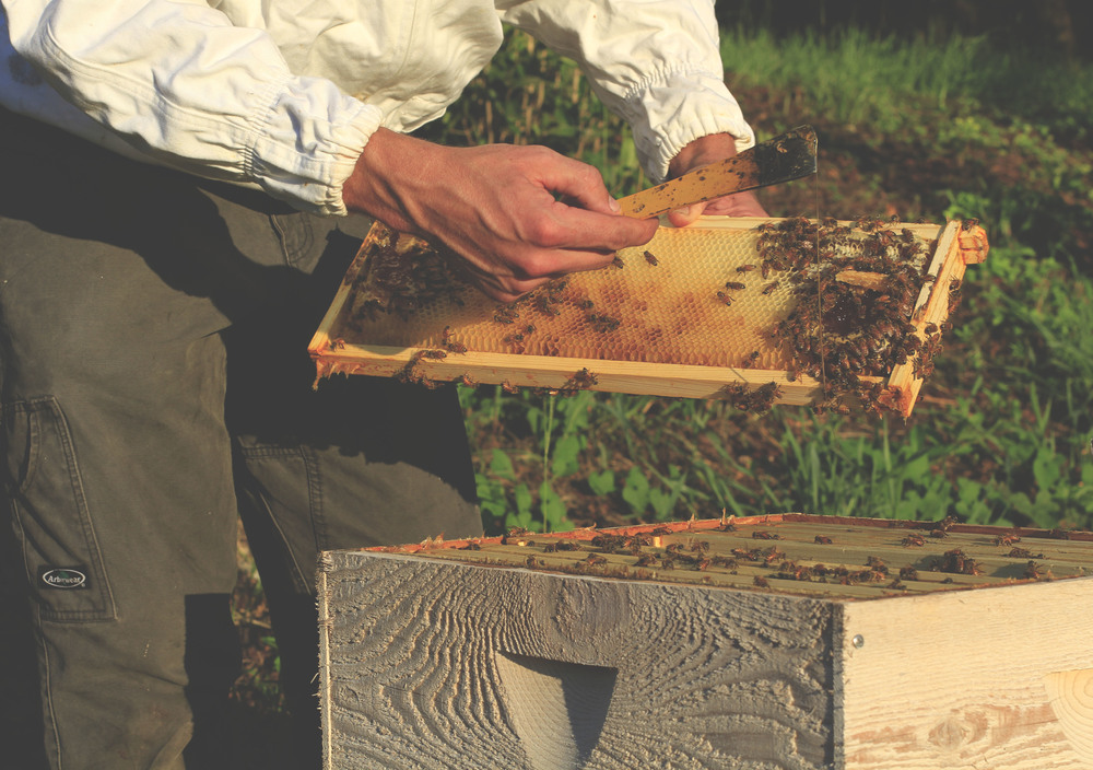 A frame of drawn comb, helpful in keeping package bees from leaving
