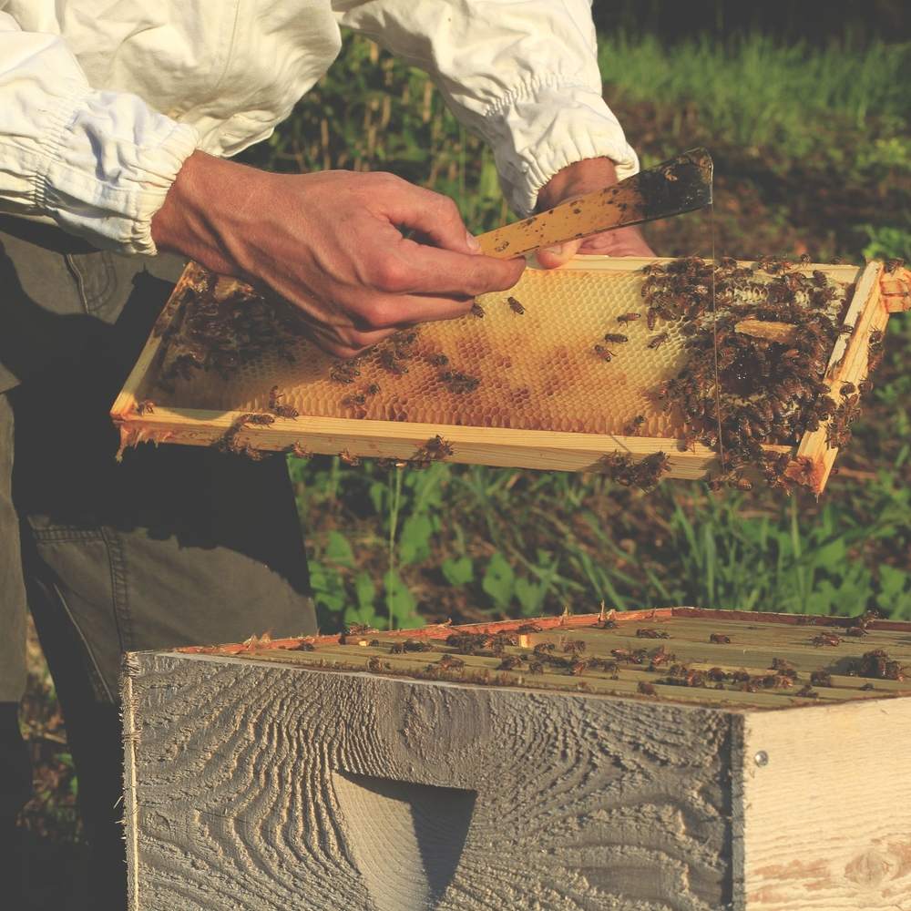 Blog Foxhound Bee Company Wiring Board Frames Why Did My Package Of Bees Leave
