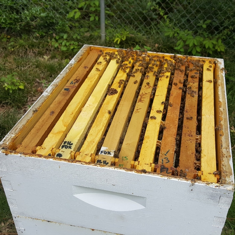 How to Start Beekeeping: 10 or 8 Frame Hives — Foxhound Bee Company