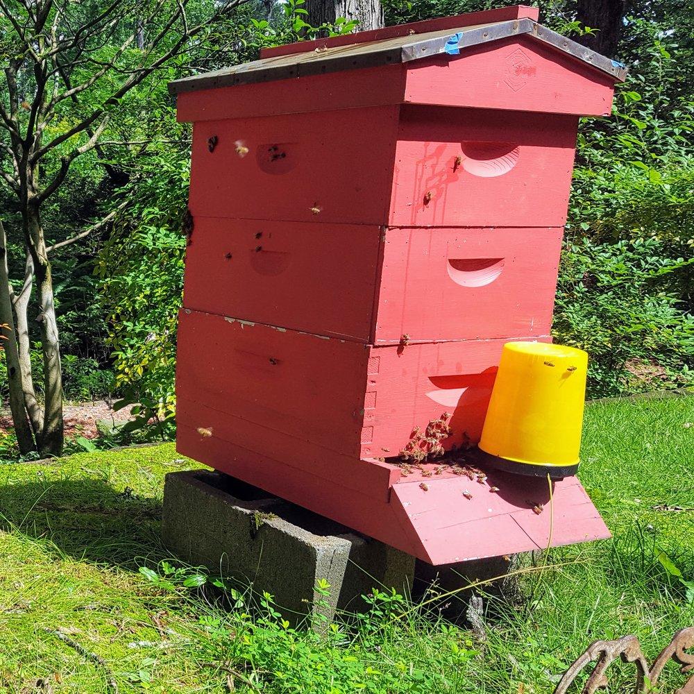 8Frame Hive on Hive Stand.jpg