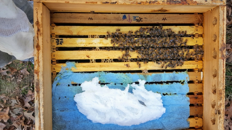 A small cluster of bees, gathering besides partially consumed dry sugar.