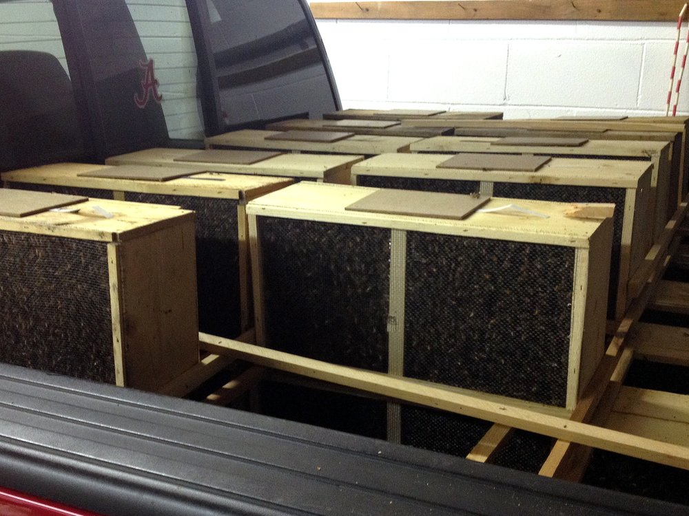 A group of 3 pound 3package bees