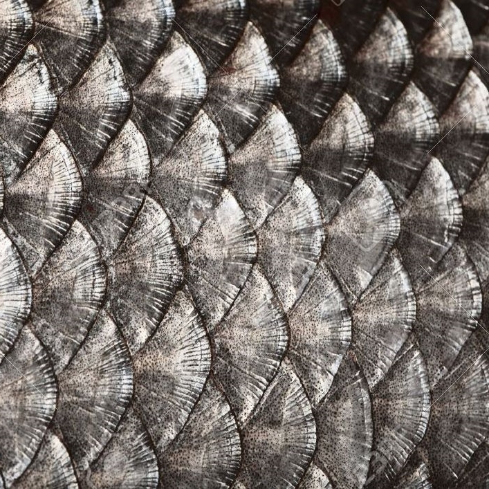 15205337-Fish-scales-background-Stock-Photo-scale.jpg