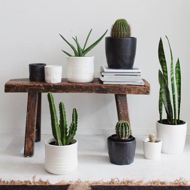 We are super excited to have worked with @indiehomecollective  on this exclusive range of ceramic planters. Available now from their beautiful Newmarket store. 🌿 #nzmade #organicstyle