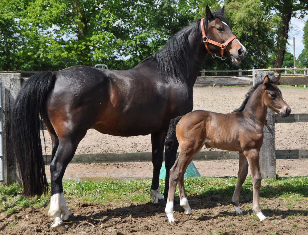 Foal BellaVita17 -4.JPG