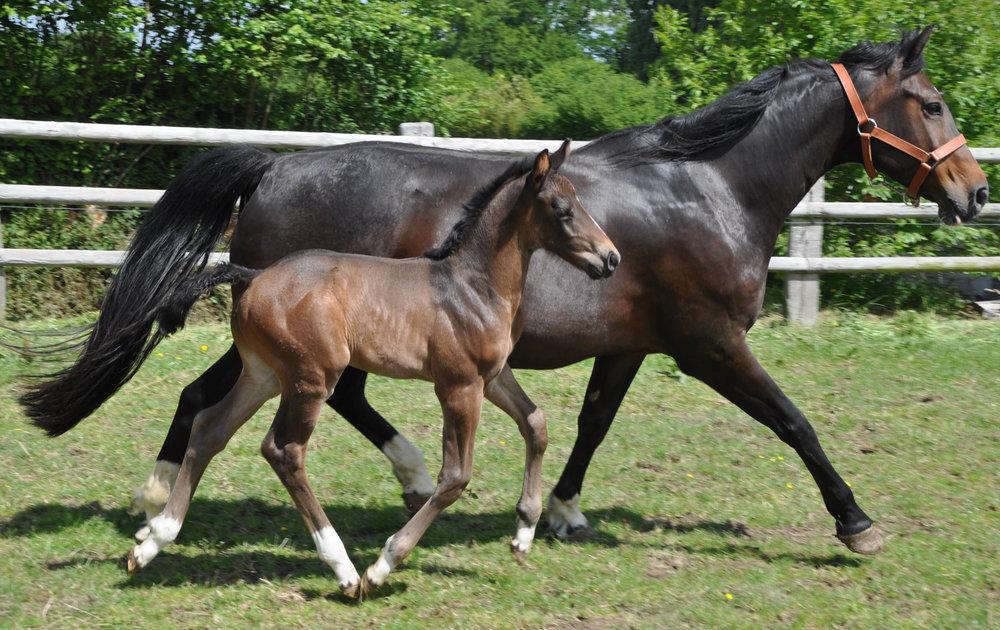 Foal BellaVita17 -3.JPG