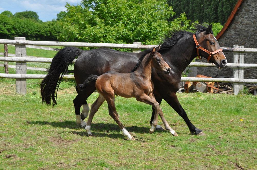 Foal BellaVita17 -1.JPG