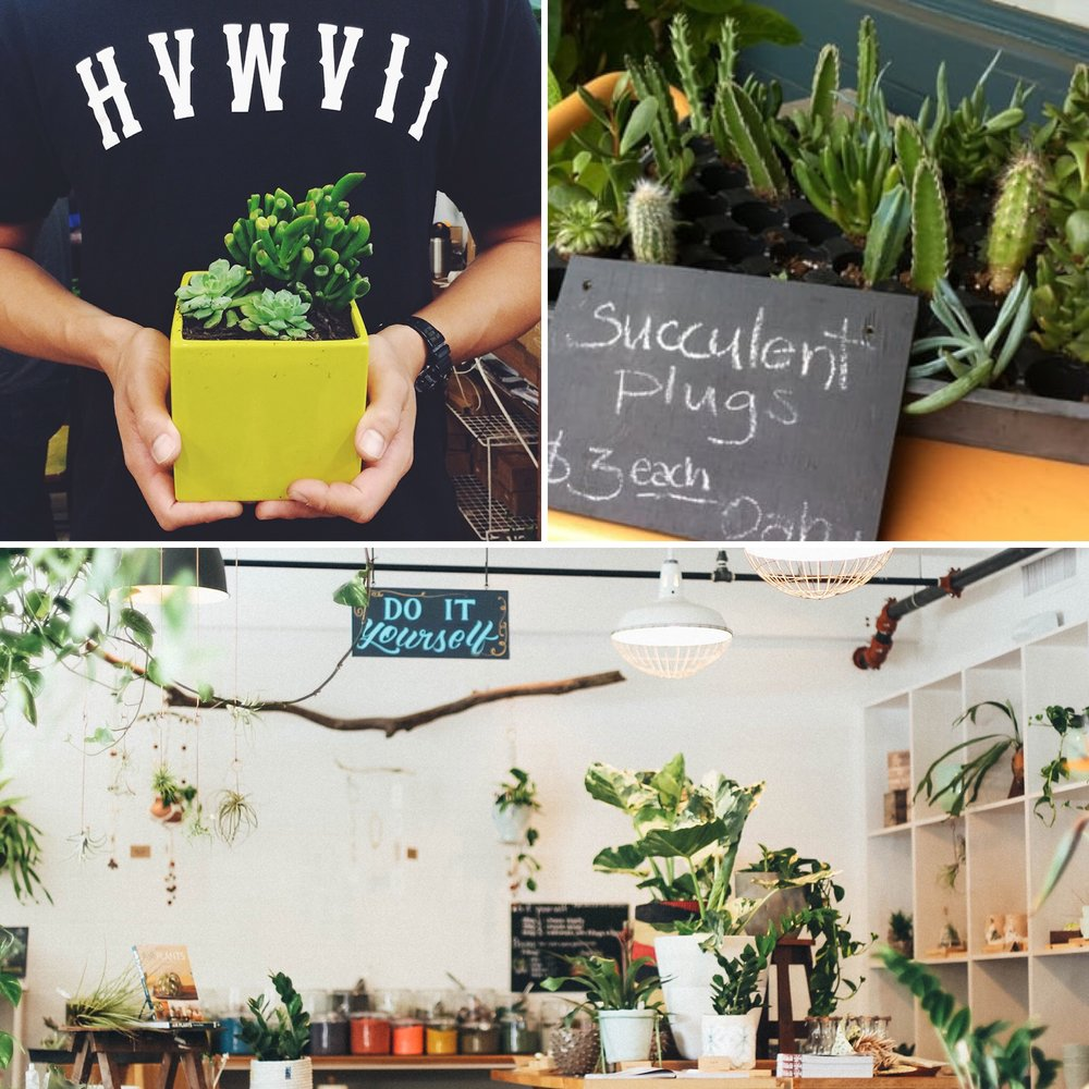 More & more of our local businesses are helping us be creative with plants. Visit  PaikoHawaii.com  for workshops & calender events!