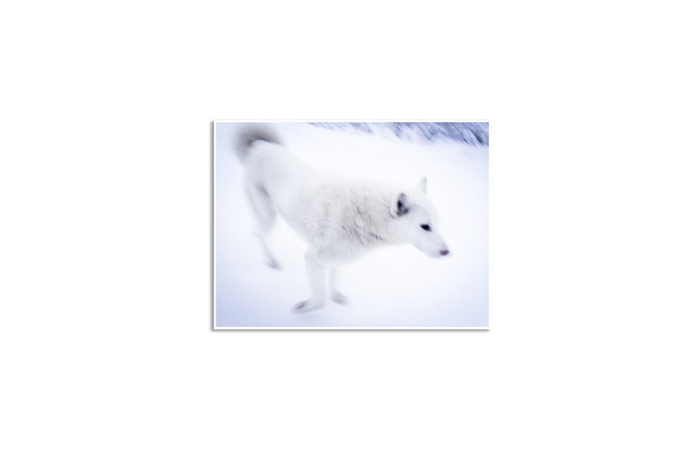 Licis-Ribak_Russian Arctic_White Wolf-1.jpg