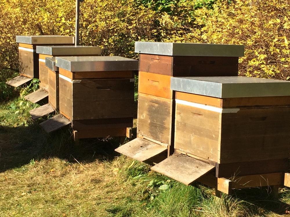 Bienensauna-Bienenstand