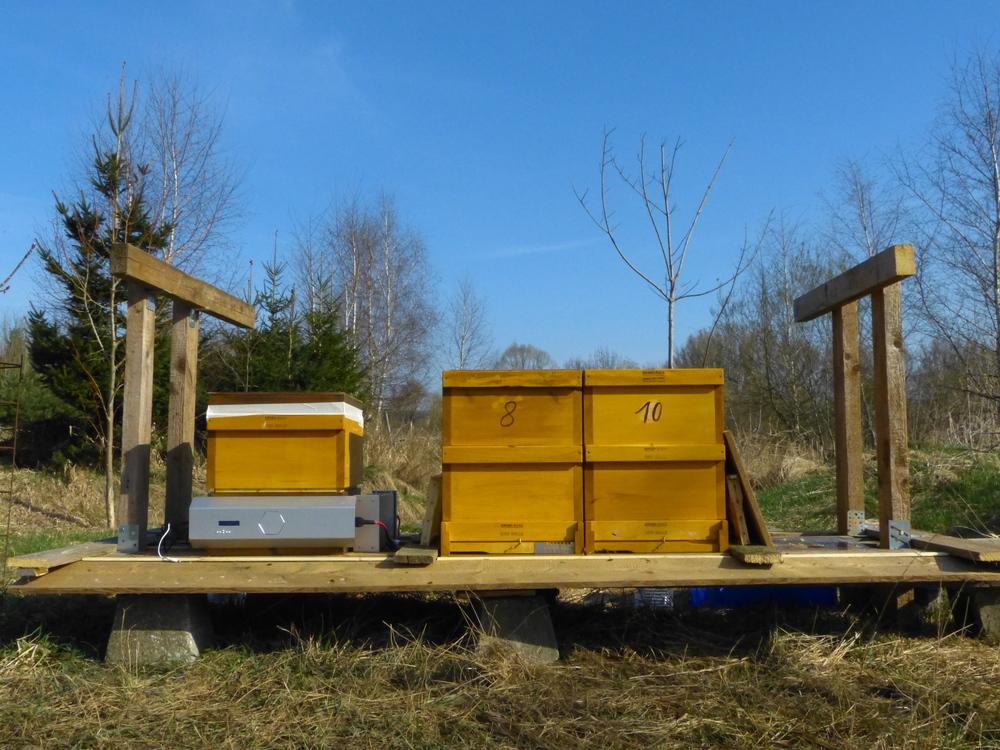 Bienensaunabehandlung Langenbach