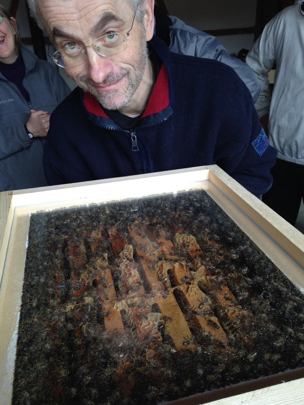Bienensauna-Vorführung in Schönbrunn