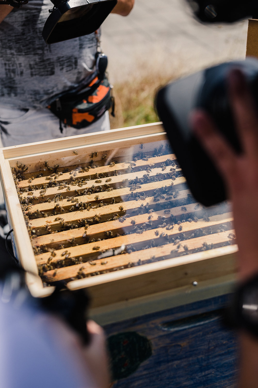 Bienensauna - Bienen während der Behandlung