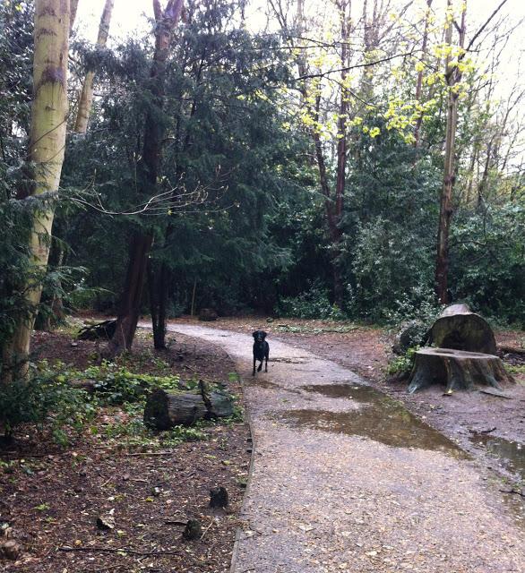 Tilly+in+woods.jpg.jpg
