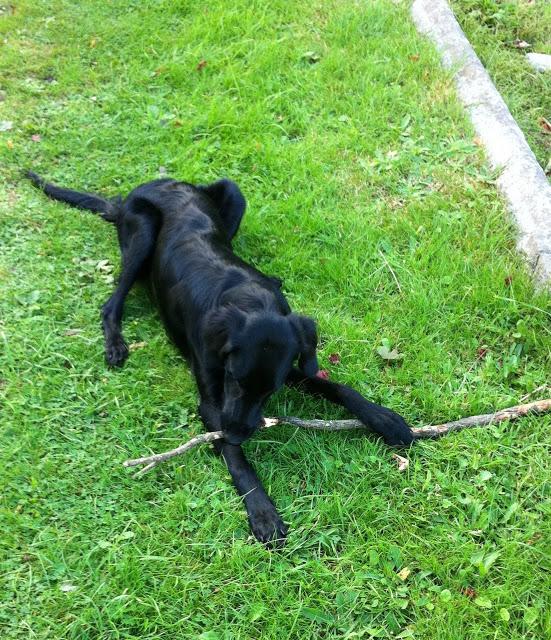 long+dog.jpg