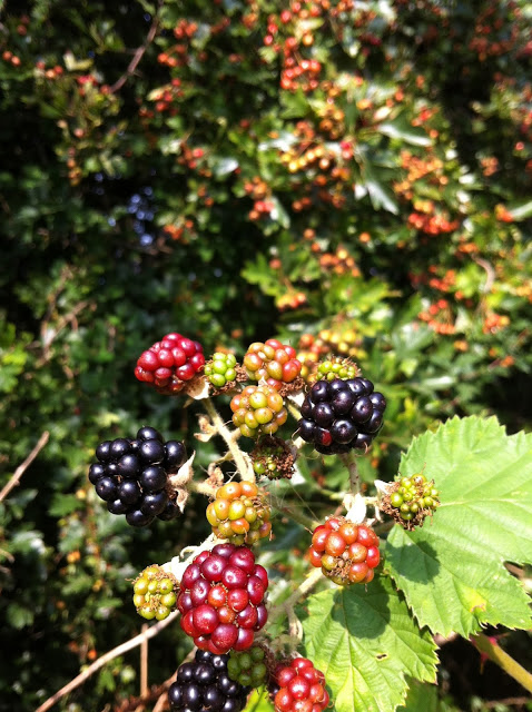 lovely+blackberries.JPG