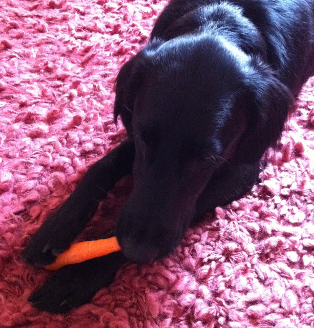 Tilly+and+her+carrot.jpg