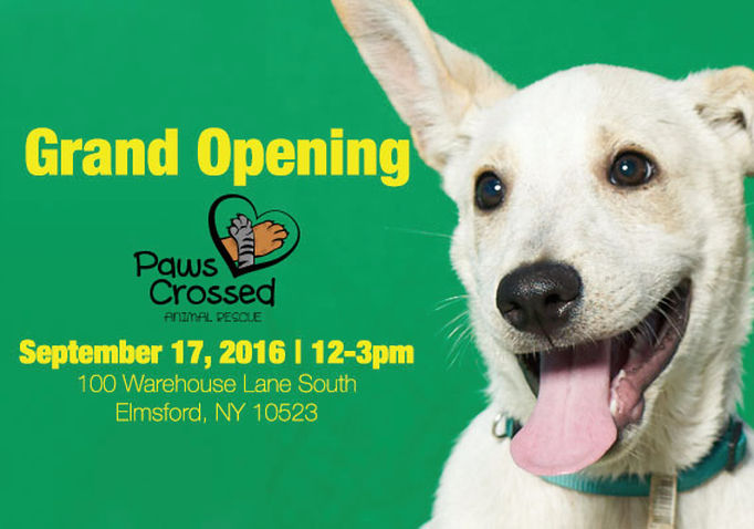 paws crossed grand opening